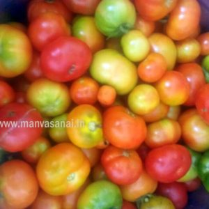 Heirloom Tomato (Naati Tomato regular)