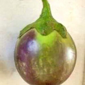 Thorny Violet Brinjal Seed (M6)
