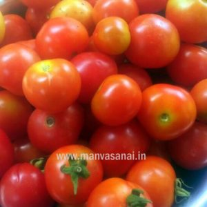 Red Cherry Tomato – Ribbed