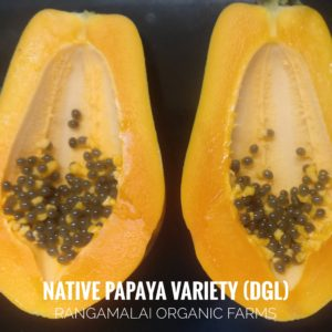 Papaya Native Variety [DGL]