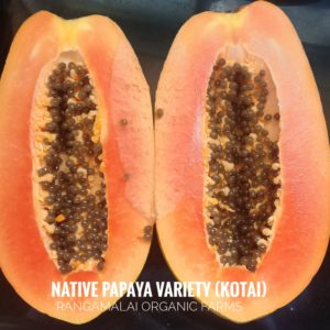 Papaya Native Variety – Type1 (Kotai)