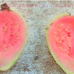 Native Pink Guava Seeds (Pear)