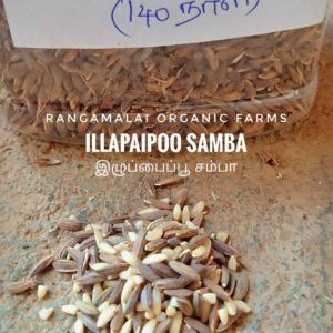 Native Paddy Seeds – Illupaipoo Samba, 500g