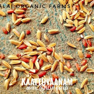 Native Paddy Seeds – Kaatuyaanum (Red Rice – 7 feet tall), 500g
