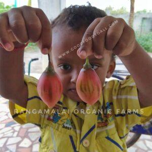 Sirumalai Tree Tomato / Tamarillo Seeds